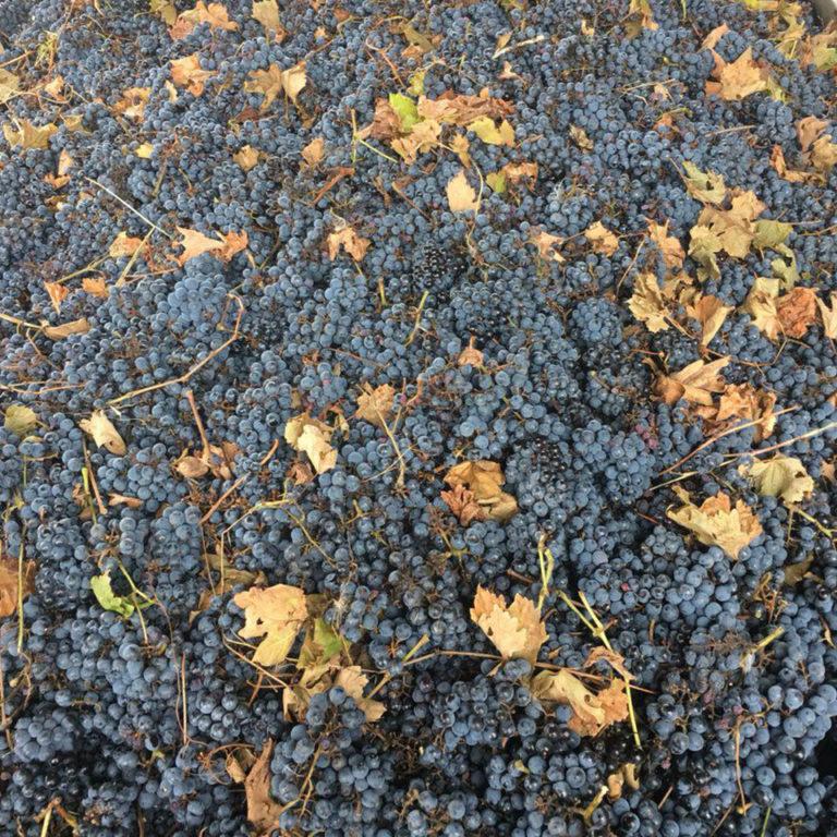 Late harvest Cabernet-Sauvignon 2018